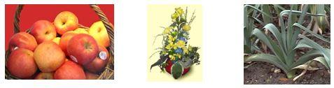 Image expo fruits et légumes